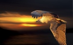 _X0A3180abstractsea and eagle-001.JPG