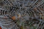 180A8469Jeweled spider Saturday 6 August free camp-001-small.jpg