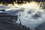 Rod_Burgess_1_Lining up the ducks_smaller.JPG