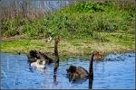 David Raff - 1 - Jerra Wetlands.JPG