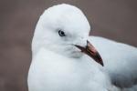 seagulhead.jpg