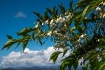 Julie Taylor - Arboretum spring (3).jpeg
