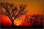 DavidRaff-8-SabiSabi Sunset.jpeg