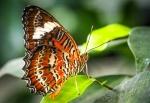 JenThompson-8-Butterfly.jpeg