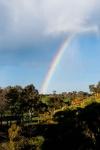 John Hamilton 6 Rainbow.jpeg