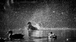 Shane Baker_08_Making a splash_8507740.jpeg