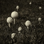 Shane Baker_Z62_0926_After the rain - mushrooms.jpg