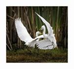 BIRDS1829 (1500x1387).jpg