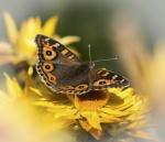 Butterflies - botanic garden's-3305-smaller.JPG
