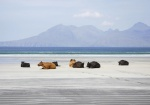 COOS ON LAIG BEACH SUPER--smaller.JPG