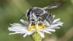 Bees 6 April 2018-104.JPG