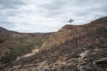 3 Ormiston Gorge 2019 fire damage_1_2.JPG