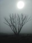 Morning mist Whites_2.JPG