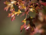 Autumn (12 of 3) (Large).jpg
