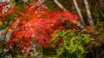 autumn colours 1.jpg