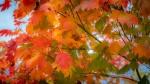 autumn colours 2.jpg