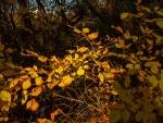 Autumn Morning, Lake Burley Griffin-4.jpg