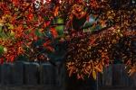 Autumn Colour 02a.jpg