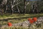Julie Taylor - Arboretum-3.JPG