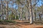 Robert Triggs_Stirling-Park (4 of 4) (Large).jpg