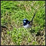 David Raff - 3 - Jerra Wetlands.JPG