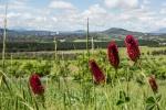Julie Taylor - Arboretum spring (6).jpeg
