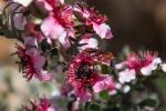 Julie Taylor - Arboretum spring (9).jpeg