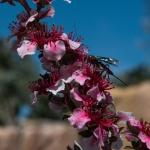 Julie Taylor - Arboretum spring (10).jpeg