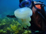 Giles West Jelly fish.jpg