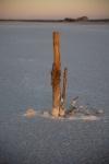 John Mitchell - tree stump Lake Tyrrell.jpg