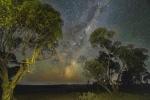 John Mitchell - Treescape Lake Tyrrell.jpg