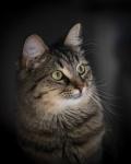 Rod_Burgess_01_Cat.jpg