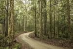 Rod_Burgess_05_trees.jpg