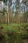 Shane Baker_Z62_0878_Forest regrowth Margaret River.jpg