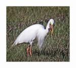 BIRDS1511 (1500x1354).jpg
