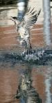 Bathtime (526x1024).jpg