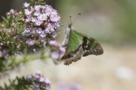 Milton-butterfly-smaller.JPG