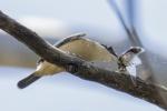 3 Kingfisher-smaller.JPG