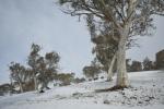 snowfall KIANDRA_NIK3928-_small.JPG