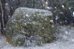 Snow on boulder Honeysuckle_small.JPG