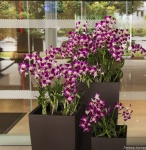 1. Orchids_small.JPG