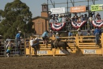 Qby rodeo 2018-103_small.JPG