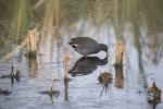 wetlands (1 of 5)_small.JPG